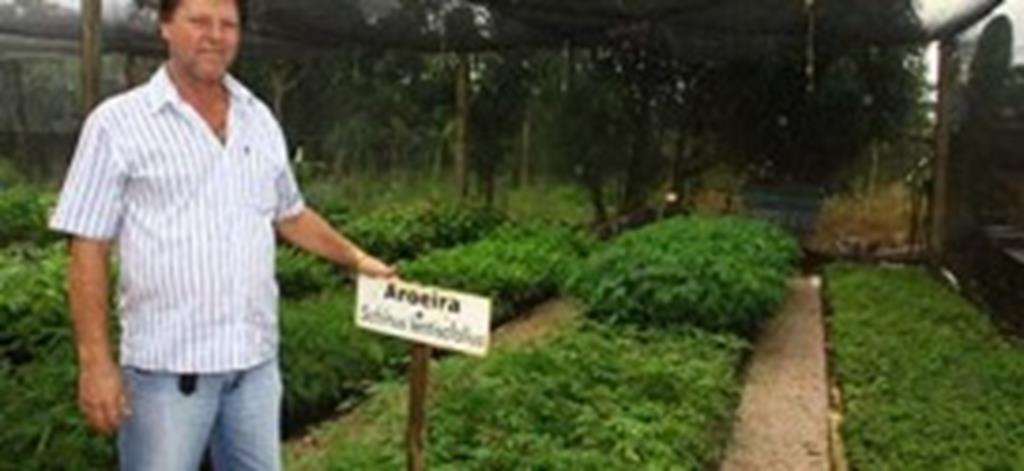 """SEDAM fará distribuição de mudas na """"Semana da Árvore"""""""